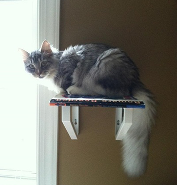Greta on a Perch